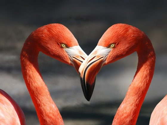 Flamingo heart
